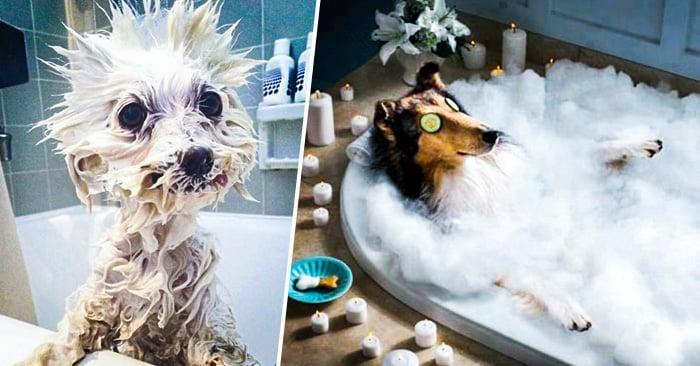 Que Extractor De Baño Es Mejor:Razones por las que el baño es el mejor momento de un perro
