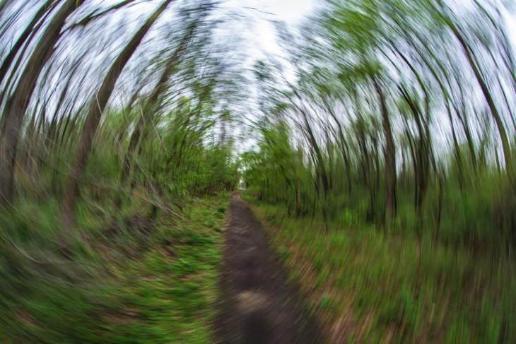 Fotografía un poco borrosa de un camino rodeado de árboles