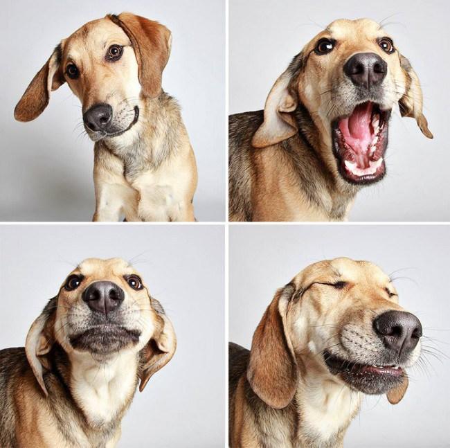 vassel hound mixto