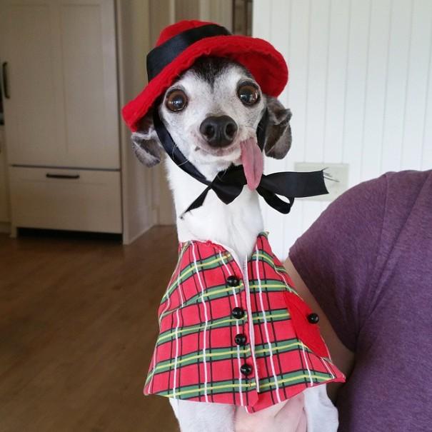 perro vestido con  traje rojo