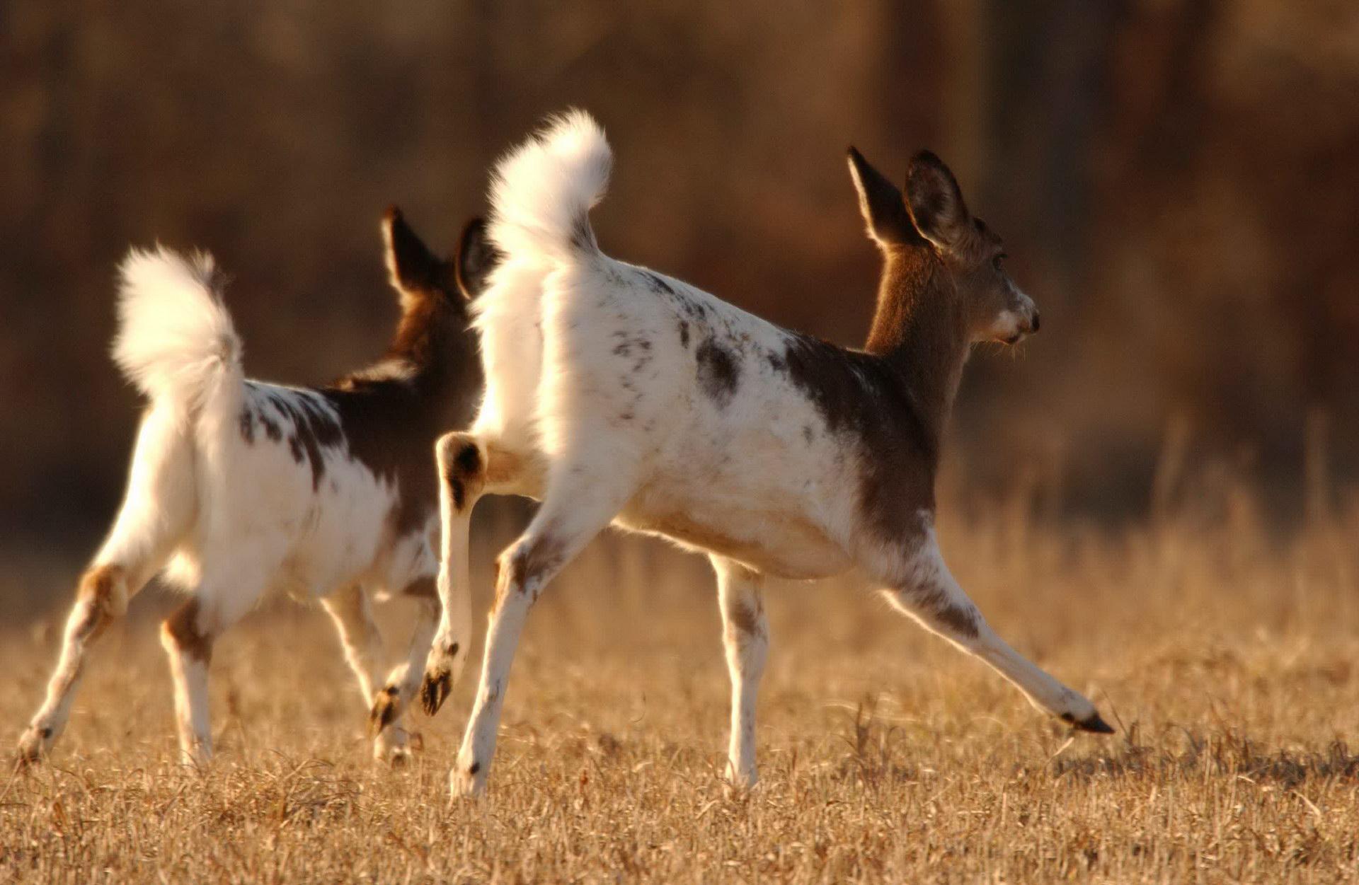 20 Mutaciones De Color De Piel De Diferentes Animales