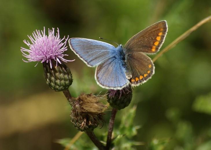 mariposa con mutaciones de colores