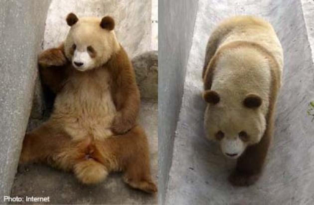 panda con mutaciones