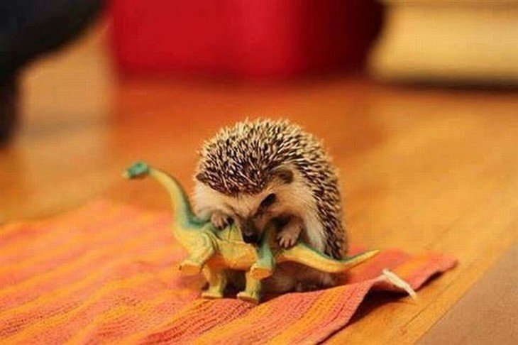 erizos jugando con dinosaurio de plastico