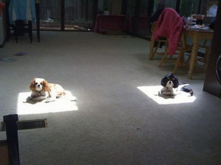 dos perros durmiendo en la sal con el sol