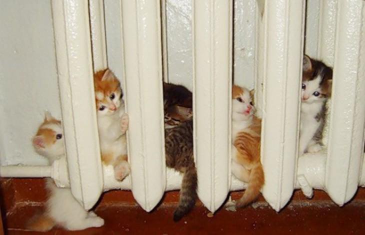 gatitos durmiendo adentro de la estufa