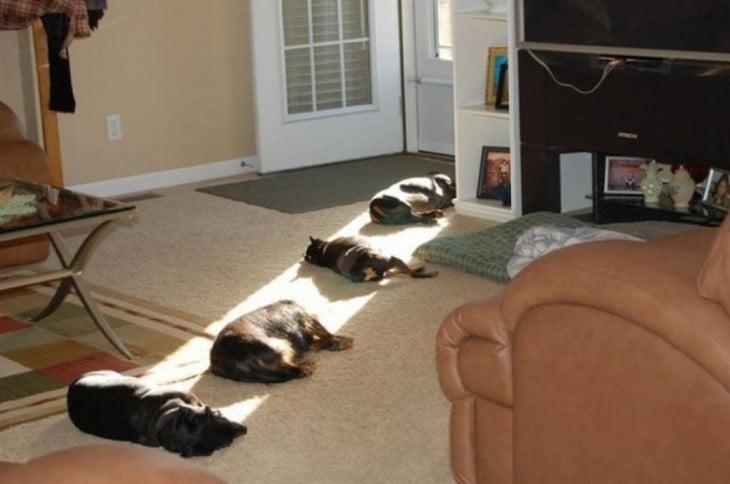 4 gatos echados en la sala con el sol
