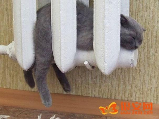 gato durmiendo adentro de la estufa
