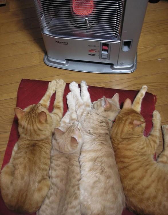 gatos al lado de la computadora