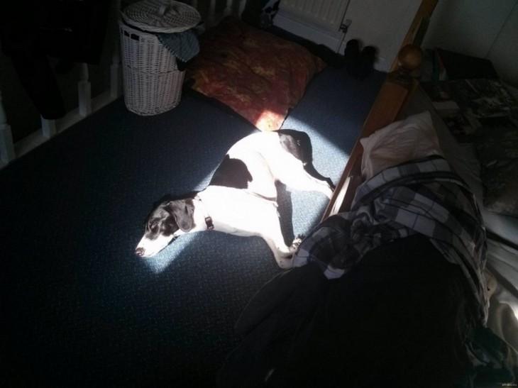 perro tomando sol en el cuarto