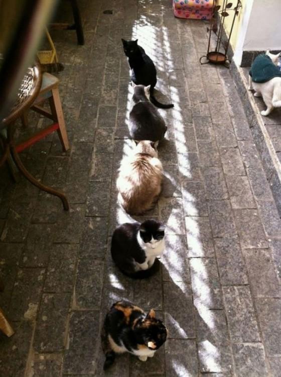 gatos en linea recta tomando sol
