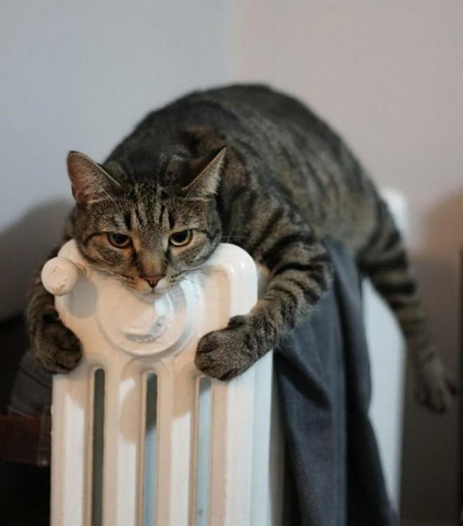 gato durmiendo arriba de la estufa