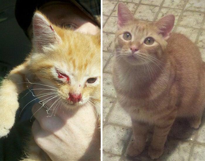 antes y despues de un gato rescatado