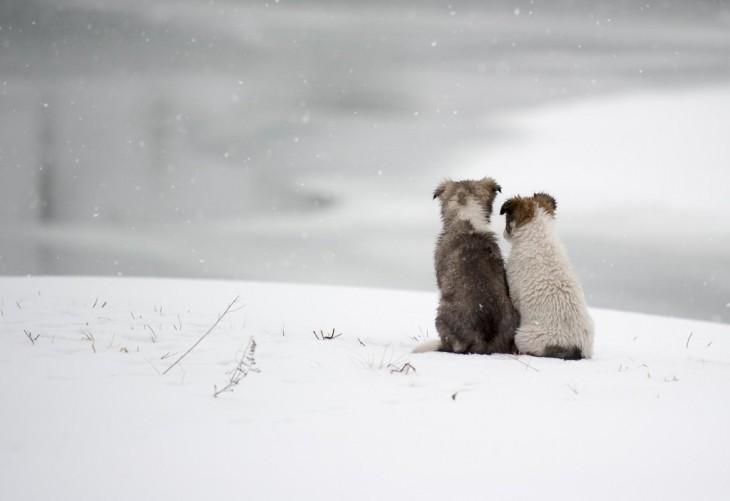 Perros sentados en la nieve mirando el horizonte