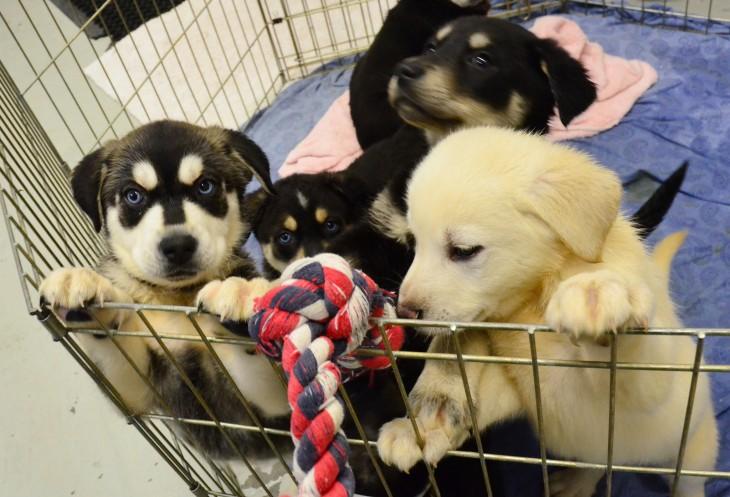 grupo de cachorros en un carrito de supermercado