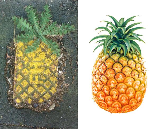 Piña y dibujo