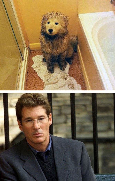 Richard Geer y perro