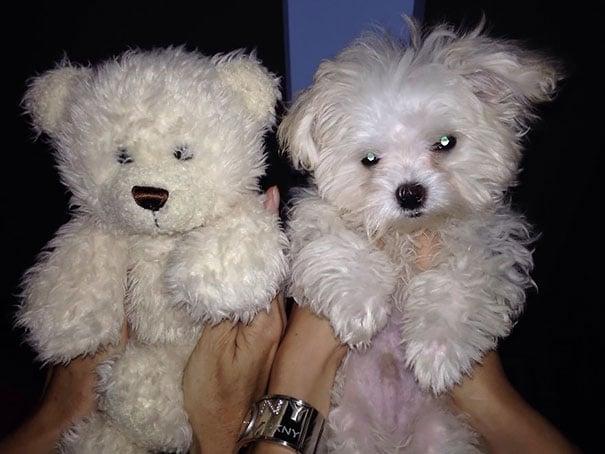perrito blando y oso de peluche