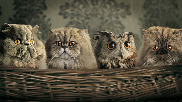 Gatos persas y buhos