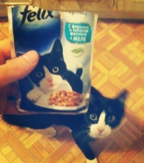 Comida de gato y gato negro con blanco