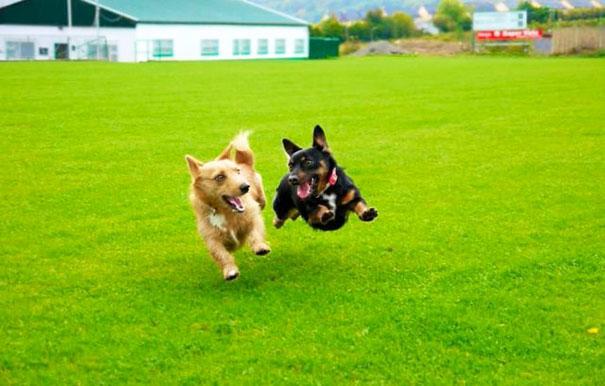 perros corriendo en parque