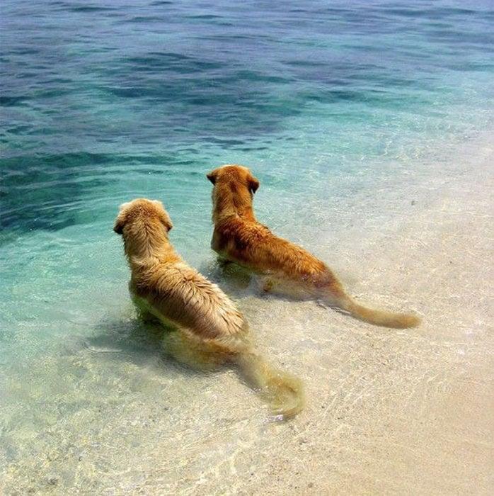 Perros mirando el mar
