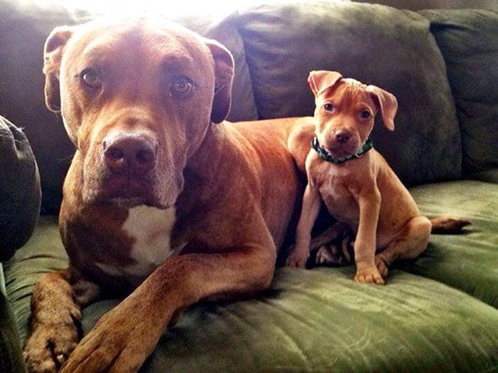 perros sentados en un sofa mirando a la camara