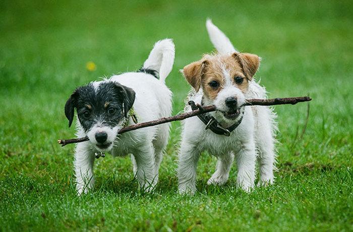 perritos chiquitos sujetando la misma rama