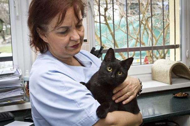 veterinaria que rescato a gato de la muerte