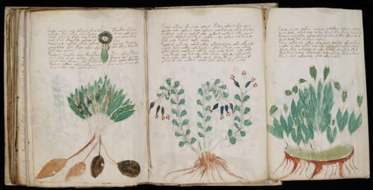 el manuscrito Voynich libro antiguo