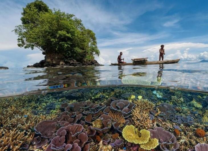 arrecife en la costa