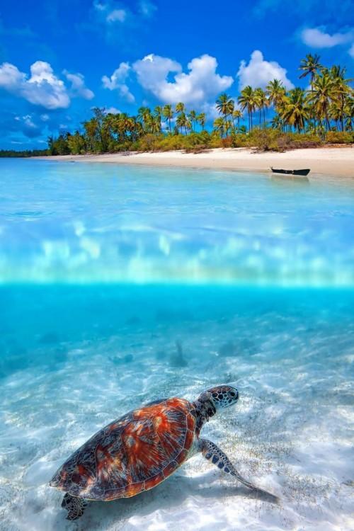 tortuga en la isla