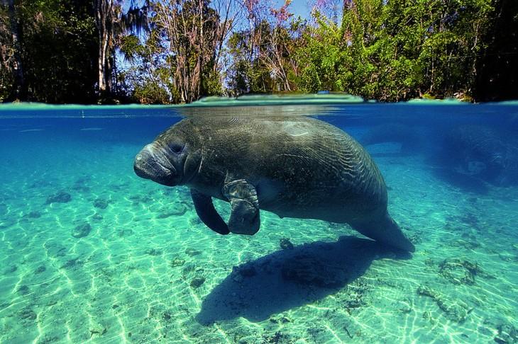 manantial nadando