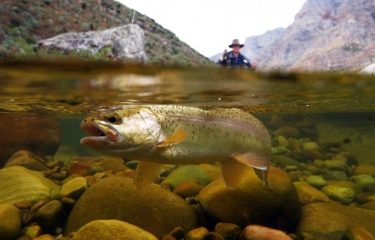 pez siendo pescado en rio