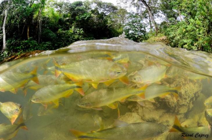 fotos debajo del agua (27)