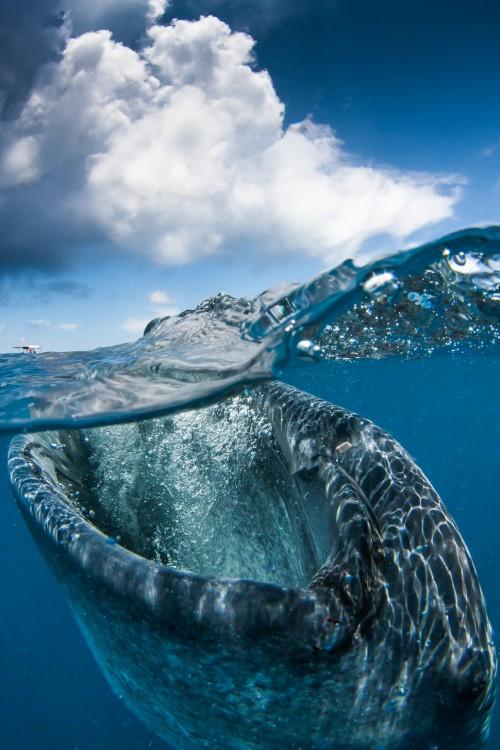 ballena comiendo