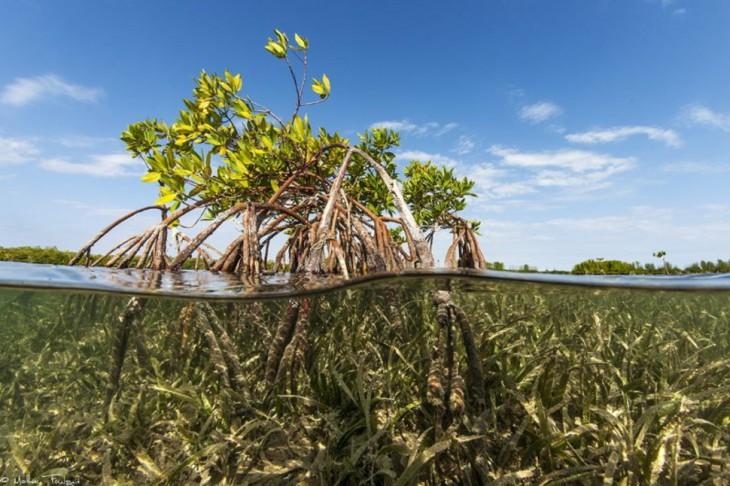 manglares en la cosat