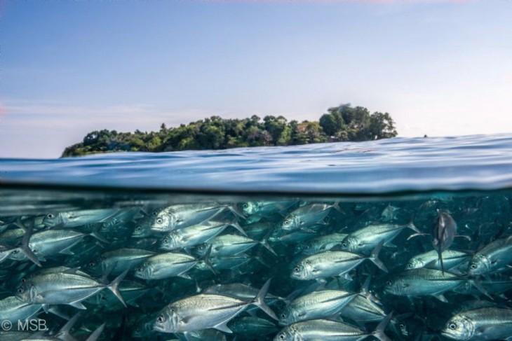 esceula de peces nadando al lado de isla
