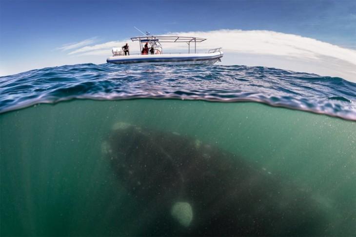 ballena debajo de un barco