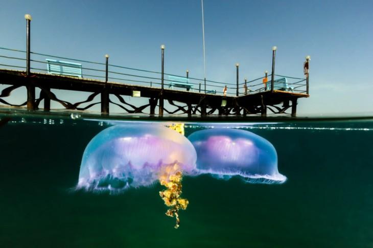 medusas al lado de un puerto