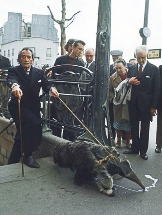 Salvador Dali con su mascota oso hormiguero, 1969
