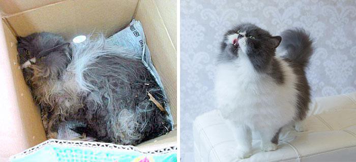 gatos con heridas curadas