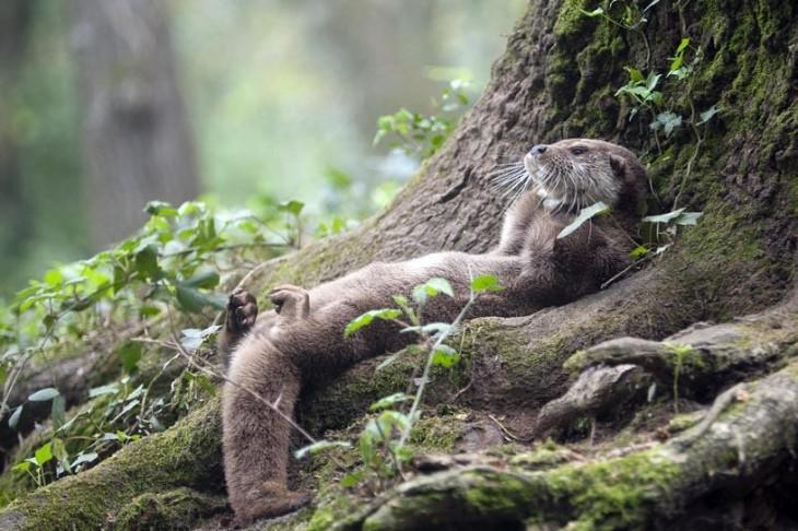 nutria durmiendo contra un arbol