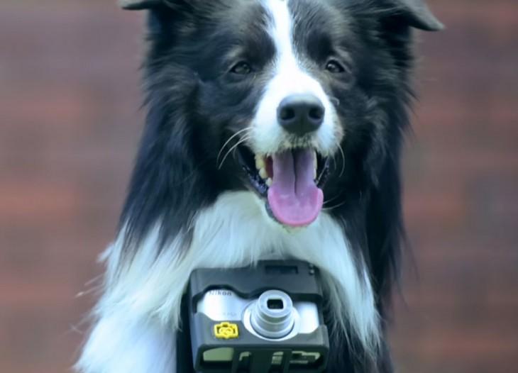 perro con camara de fotos cogandole del cuello
