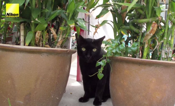 gato negro entre macetas