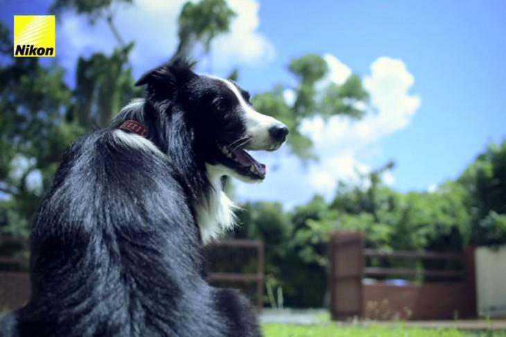 perro en el patio mirando a un costado