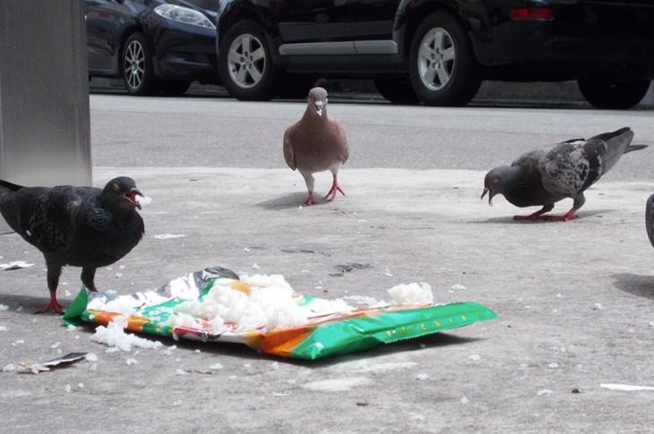 palomas comiendo pan en la plaza
