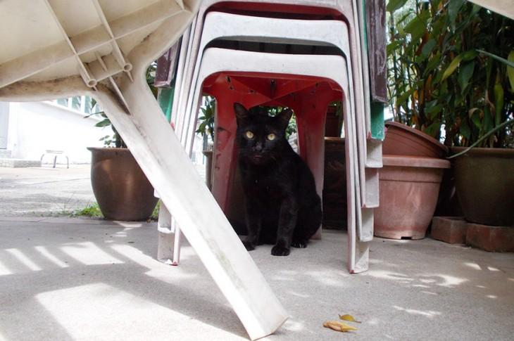 gato sentado abajo de una silla