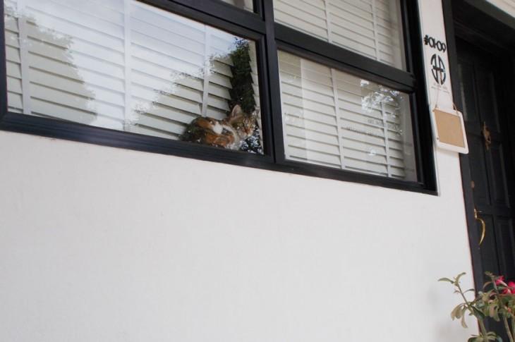 gato sentado en una ventana