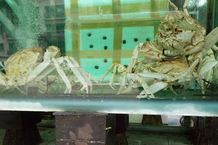 cangrejos adentro de pecera